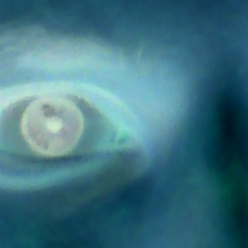Zweter Pegart's avatar