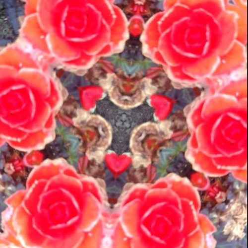 Red Velvet Walls's avatar