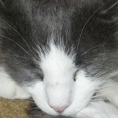 lucaswood's avatar