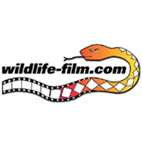 Wildlife-film.com's avatar