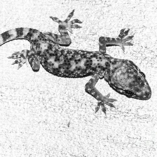 Der Gecko's avatar