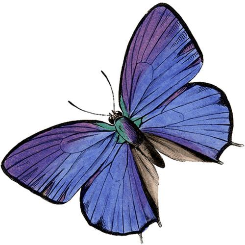 Mary Riley 3's avatar