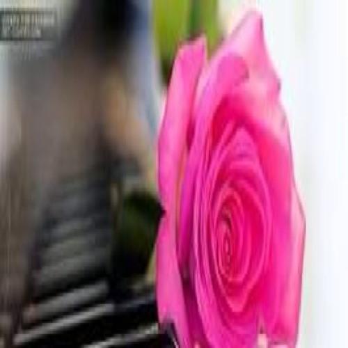 Amina Ali 11's avatar