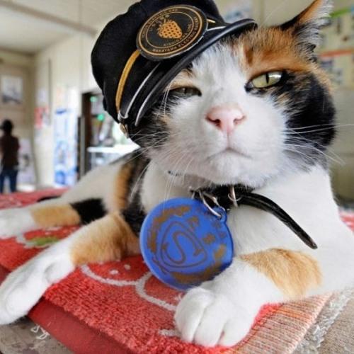 Kaptajn Kat's avatar