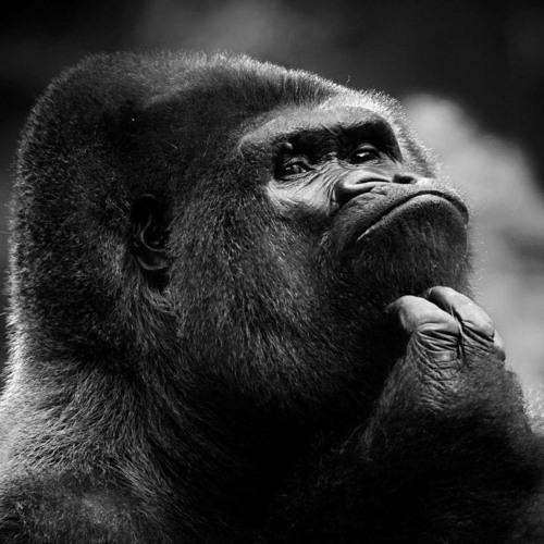 Gorilla_Bleach's avatar