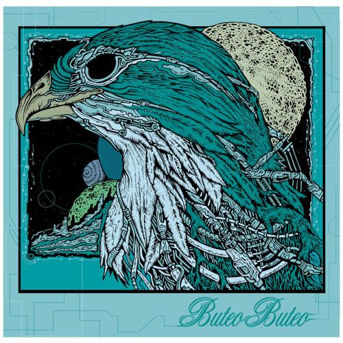 Buteo Buteo Denver's avatar