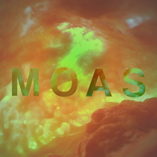 The Moas's avatar