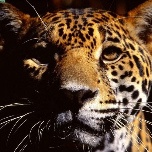 JaguarHummingbird's avatar