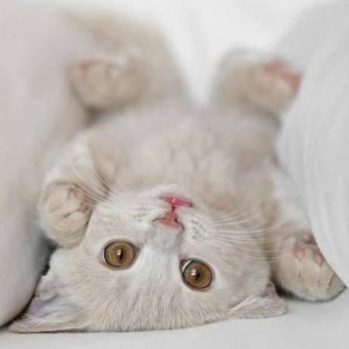 Cat_Lina's avatar