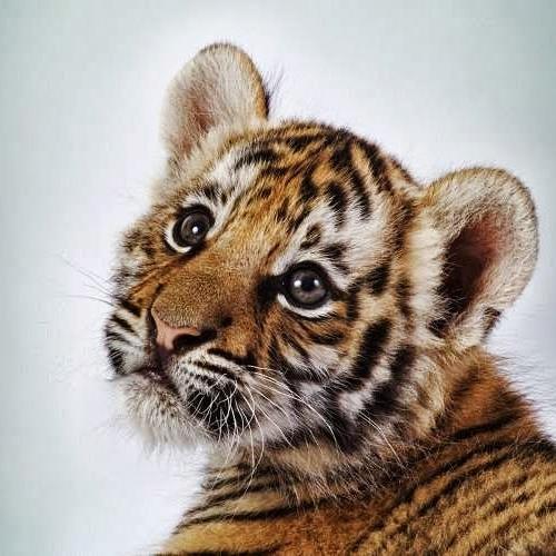 Tiger Hix's avatar