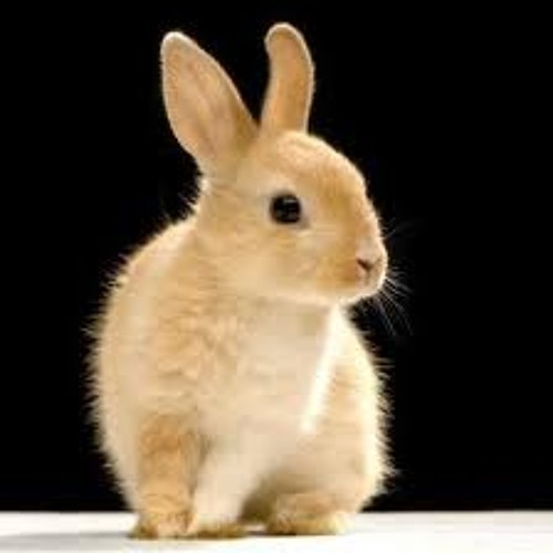 music rabbit's avatar
