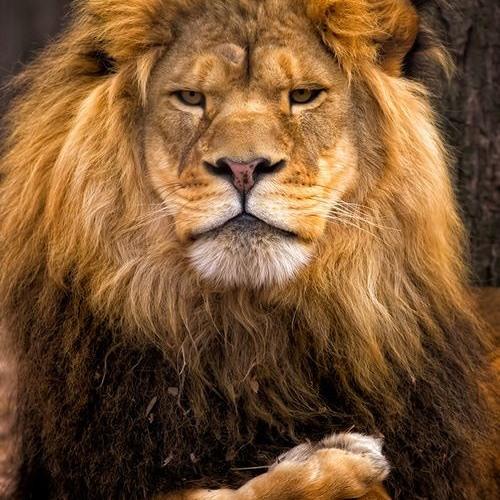 Junglejesuss's avatar