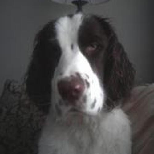 Noah Bacon's avatar