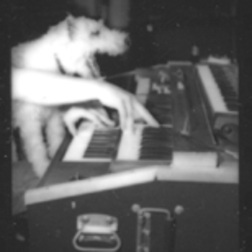Organ Wolf's avatar