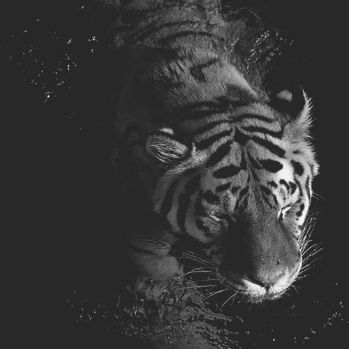 ☯ W.†!ger ☯'s avatar