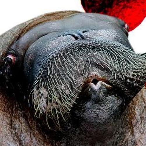Love You Like A Walrus's avatar