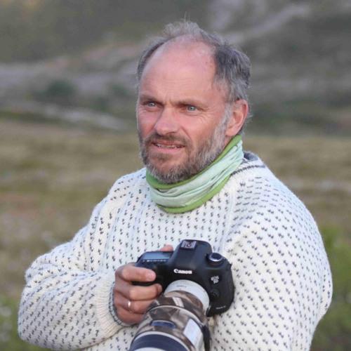 Stein Ørjan Nilsen's avatar