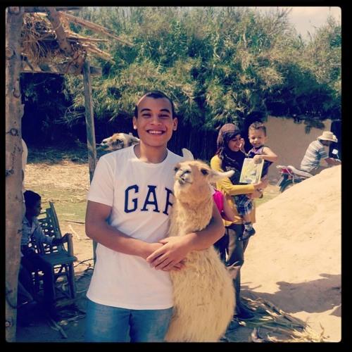 (Mohamed Emam)'s avatar