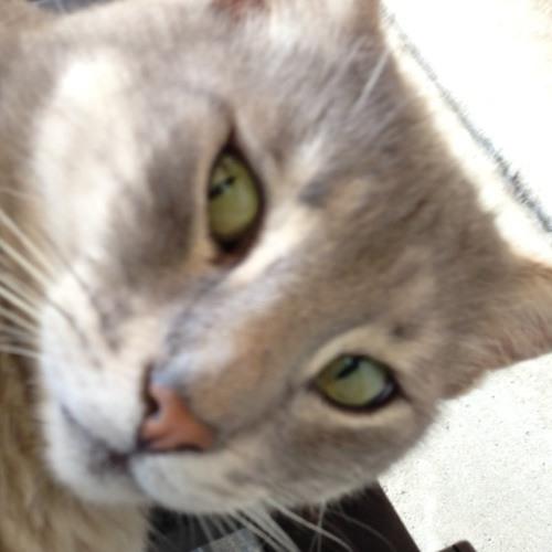 Joeyferrigno's avatar