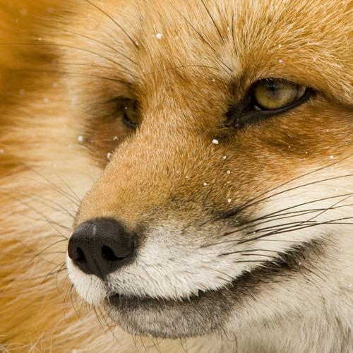 Nastess's avatar