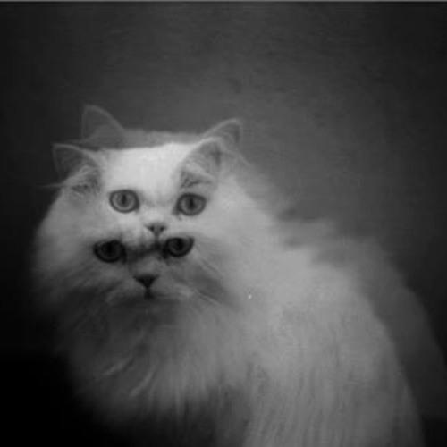 Quantum Kat's avatar