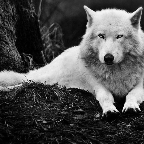 Wolf_Untergrund's avatar