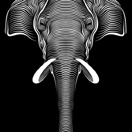 elephante post rock's avatar