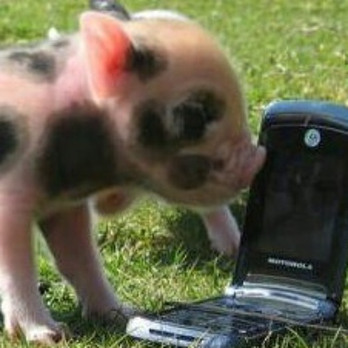 business_pig's avatar