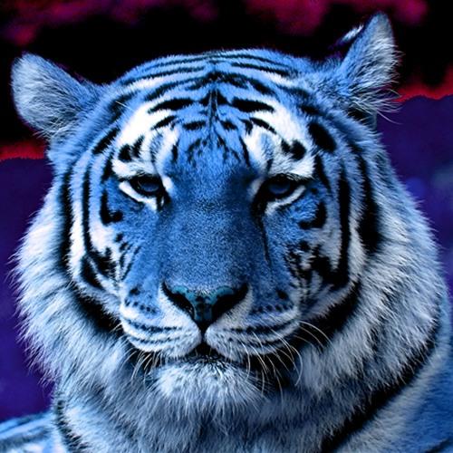 TiGr's avatar