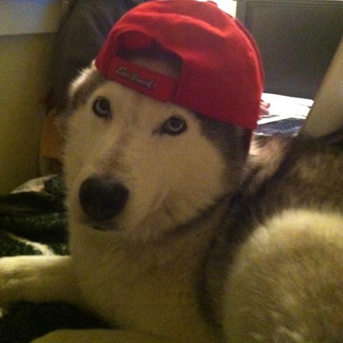 Raida Dawg's avatar