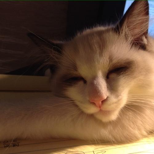 qiaobm's avatar