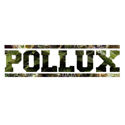 Kastor und Pollux - 13
