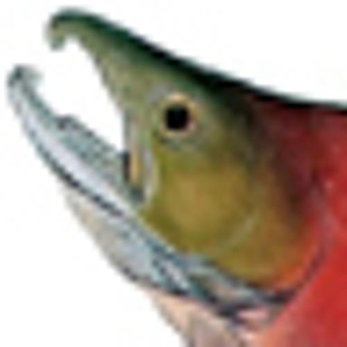 SalmonDru's avatar