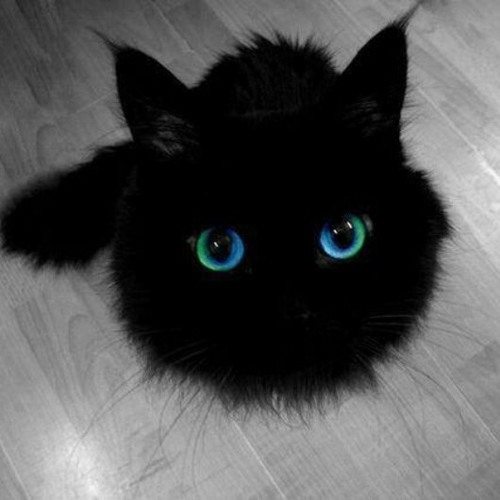 stephy_darkness's avatar