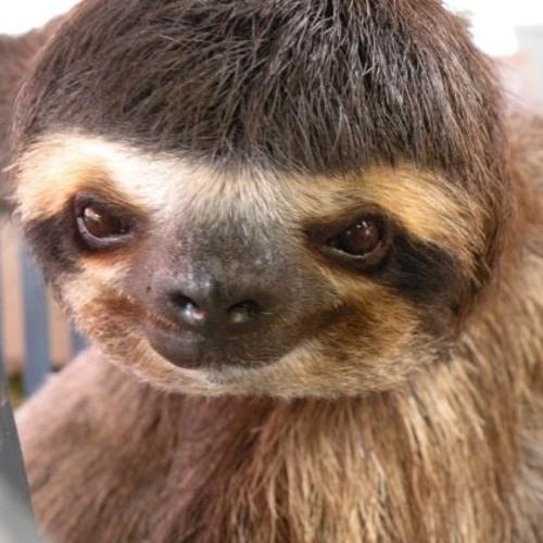 Bowl-Cut Sloth's avatar