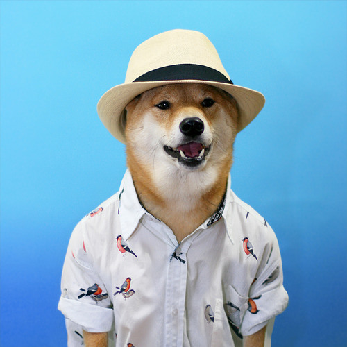 Fit aber Fertig's avatar