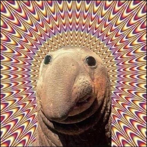 Lochie Taylor's avatar