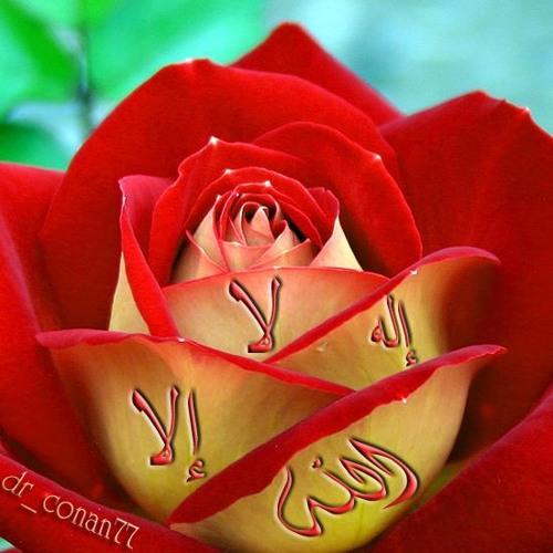 ahmad ayoubi's avatar