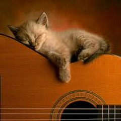 Strumming Cat