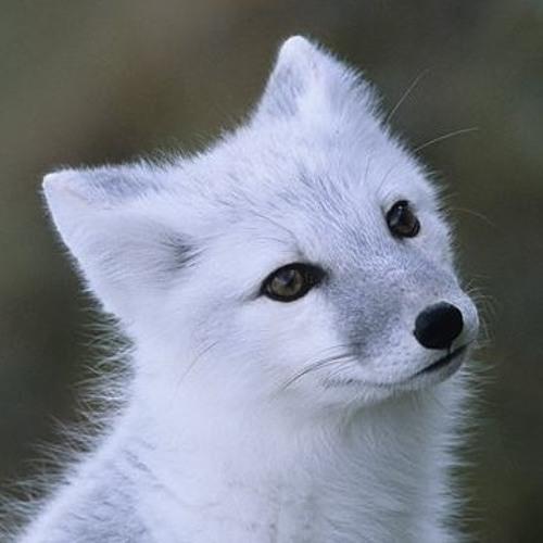 ArcticFqx's avatar