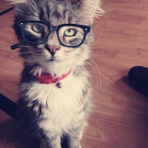 Anna Hiddleston 1's avatar
