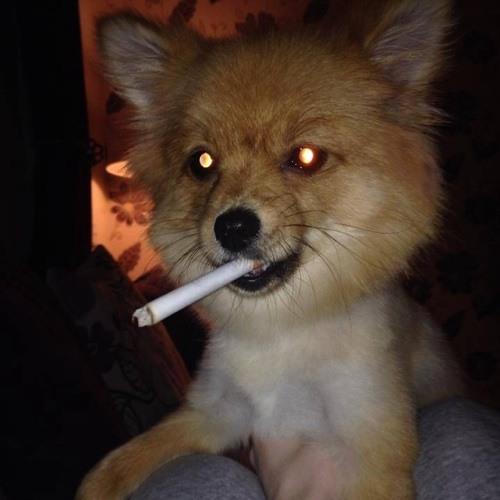Logan Mane La Flare's avatar