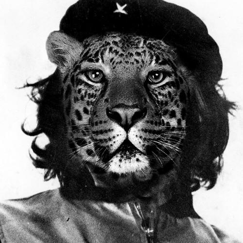 Che Guepardo's avatar