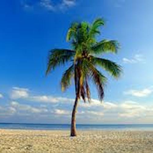 The palm tree's avatar