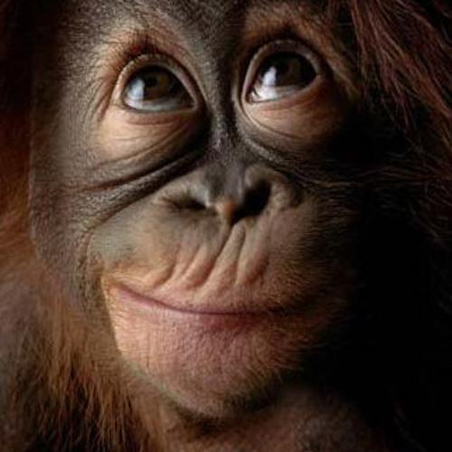 Macaco Simao's avatar