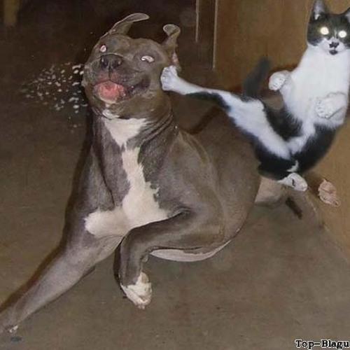 Kitty Fight Club's avatar