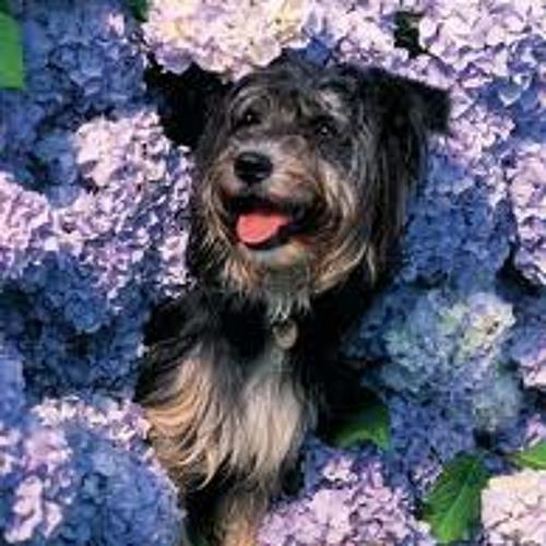 secretdog's avatar