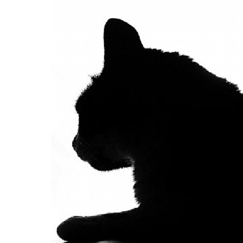 low indigo's avatar