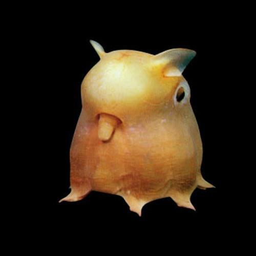 TURBIOPEZ's avatar