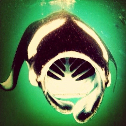 RRRRRYOO's avatar